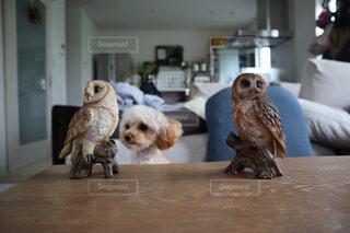 フクロウと犬の写真・画像素材[4437178]