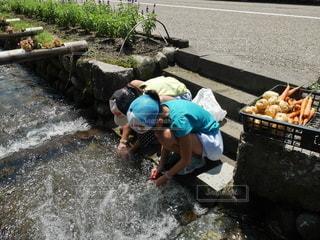 野菜を洗っている子どもの写真・画像素材[3345010]