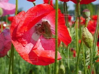 花のクローズアップの写真・画像素材[3352101]
