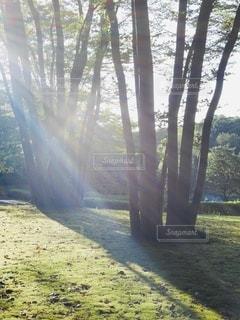 森の中の木の写真・画像素材[3363345]