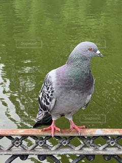 座っている鳥の写真・画像素材[3371860]