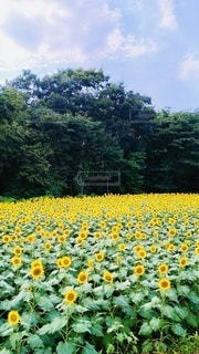 花園のクローズアップの写真・画像素材[3379199]