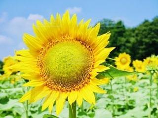 花のクローズアップの写真・画像素材[3379197]