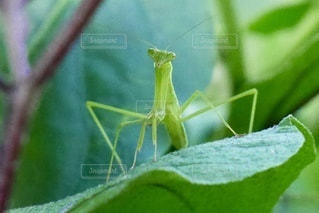 緑の葉のクローズアップの写真・画像素材[3479605]