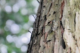 木の枝に止まっている虫の写真・画像素材[3548537]
