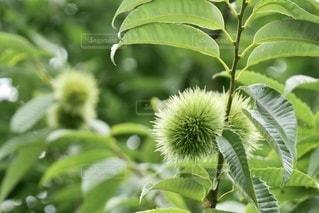 緑の植物のクローズアップの写真・画像素材[3589495]