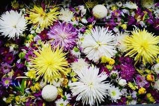 紫色の花で満たされた花瓶の写真・画像素材[3673782]