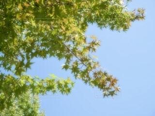 枝の葉の写真・画像素材[3677801]