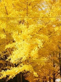 木のクローズアップの写真・画像素材[3693496]