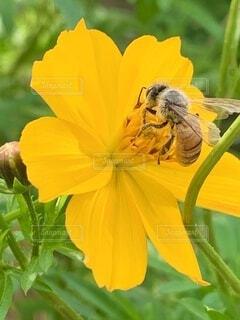 花のクローズアップの写真・画像素材[3745788]