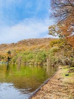 木々に囲まれた水の体の写真・画像素材[3769571]