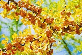 木の実のクローズアップの写真・画像素材[3809885]