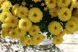 花のクローズアップの写真・画像素材[3857073]