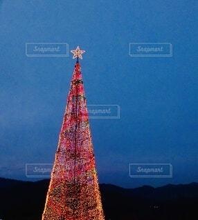 大きな高いツリーの写真・画像素材[3888451]