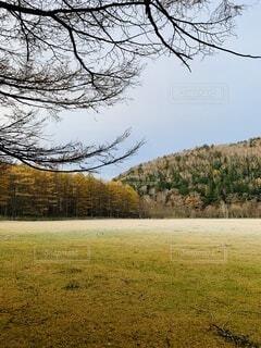 背景に木々のあるフィールドの写真・画像素材[3908974]