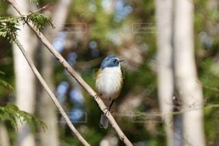 木の枝にとまっている小鳥の写真・画像素材[3911995]