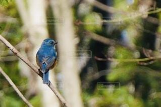 木の枝に止まっている青い鳥の写真・画像素材[3911994]