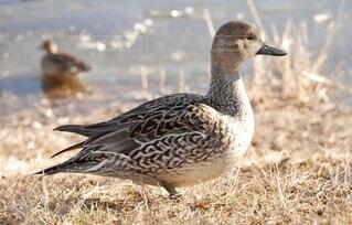 草むらに立つ鳥の写真・画像素材[4045983]