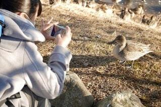 草の中に立っている鳥の写真・画像素材[4057739]