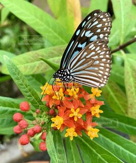 花と蝶のクローズアップの写真・画像素材[4182474]