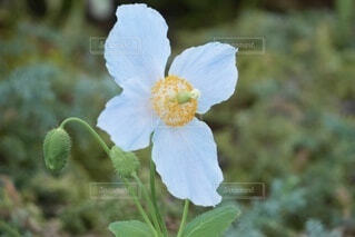 花のクローズアップの写真・画像素材[4182473]