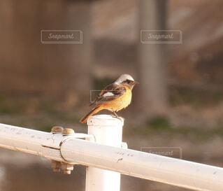 鳥の写真・画像素材[4216168]