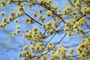 黄色い花の写真・画像素材[4270823]