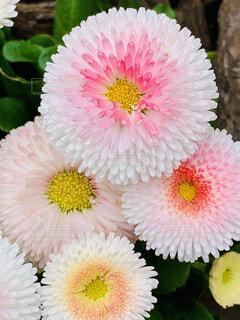 花のクローズアップの写真・画像素材[4286702]