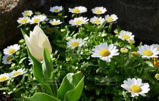 白い花の写真・画像素材[4298821]