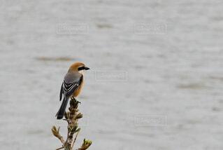 木に座っている鳥の写真・画像素材[4298820]