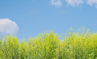 青空と植物の写真・画像素材[4348488]