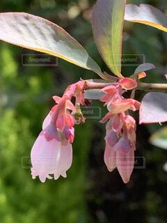 花のクローズアップの写真・画像素材[4381957]