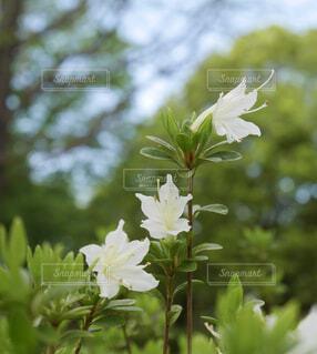 花のクローズアップの写真・画像素材[4441347]