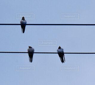 電線にとまっている鳥の写真・画像素材[4459182]