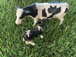 芝生の上にいる牛の写真・画像素材[4675674]