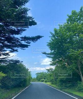道路の脇にある木の写真・画像素材[4675673]