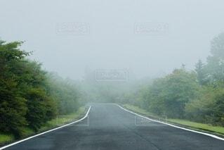 森の隣の霧がかった道路の写真・画像素材[4756155]