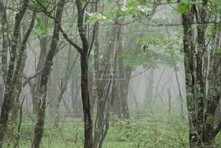 森の中の木の写真・画像素材[4756156]
