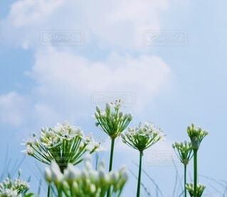 花のクローズアップの写真・画像素材[4779846]