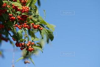 植物のクローズアップの写真・画像素材[4859270]