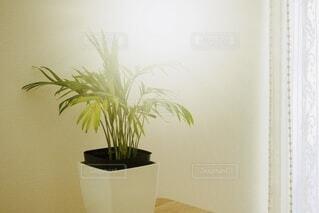 テーブルの上の観葉植物の写真・画像素材[4942287]