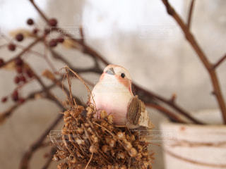 小鳥の写真・画像素材[3228886]