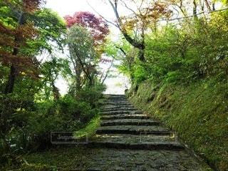 緑の真ん中にある階段の写真・画像素材[3229951]