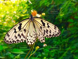 自然の写真・画像素材[292588]