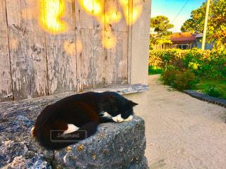 猫の写真・画像素材[301444]