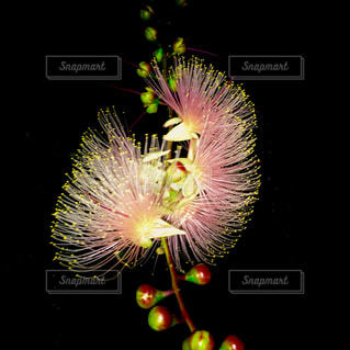 花の写真・画像素材[574681]