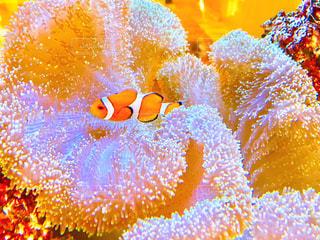 魚の写真・画像素材[583370]