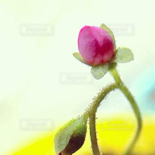 近くの花のアップの写真・画像素材[1431323]