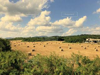近くに乾いた草のフィールドのの写真・画像素材[1516130]