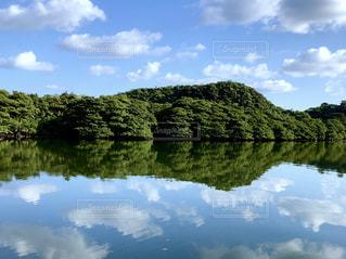 西表島のマングローブ林の写真・画像素材[1758116]